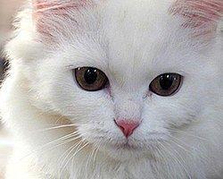 Kedi ve Köpeklerde Peritoneal Diyaliz Uygulaması
