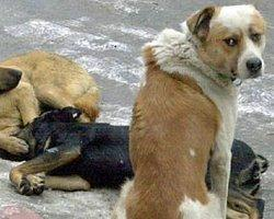 Ankara'da Sokak Köpeği Katliamı