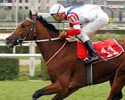 At Yarışlarında Günler Değişiyor!