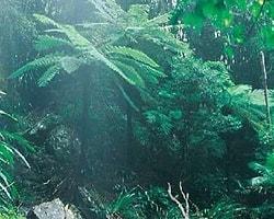 Ormanda Bikiniyle 4 Gün 4 Gece