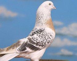 Kuş yüzünden arkadaşını bıçakladı