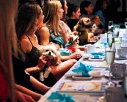 Köpek Dostlardan 'Düğün Önü' Partisi...