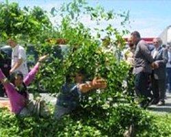 Çay Üreticisi Sahil Yolunu Ulaşıma Kapattı