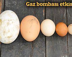 Tavuklar da gaz bombasından etkilendi CNNTurk.com