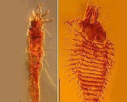 230 Milyon Yıllık Böcek Fosilleri Bulundu
