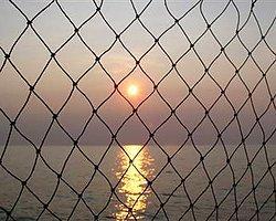 Karadeniz'de Balık Bitiyor