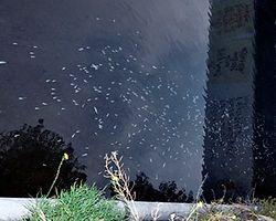 Kağıthane Deresi'ndeki Balıklar Ölüyor
