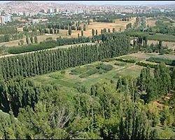 Atatürk Orman Çiftliği'nin Ağaçları Ne Olacak?