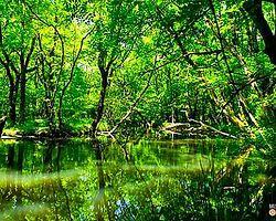 İğneada Longoz Ormanları İçin İmza Kampanyası