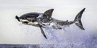 2012'nin En İyi Hayvan Fotoğrafları