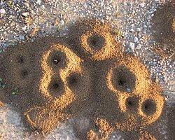 Karınca Yuvasının İnanılmaz Yapısı Video