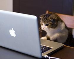 Kedi Videoları İzleyerek Milyoner Olan ABD'li Yazılımcı