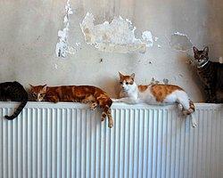 Bir Evden 67'si Ölü, 166 Kedi Çıktı