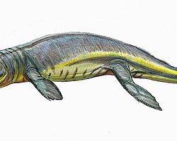 165 Milyon Yıllık Fosil Müzenin Çekmecesinde Bulundu