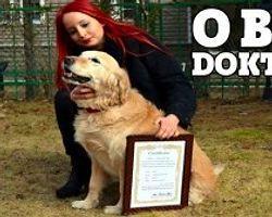 Doktor Köpekler Şifa Dağıtıyor