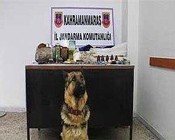 """PKK'nın Cephanesini Jandarma Köpeği """"Akım"""" Ortaya Çıkardı"""