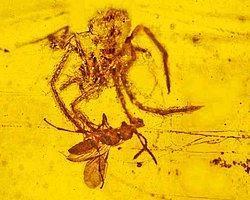 100 Milyon Yıllık Örümcek Saldırısı