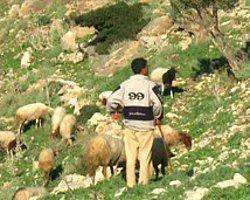 Tunus'un Köylerinde Ekoturizm