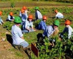 Riski Az, Kazancı Çok Organik Girişim Projeleri