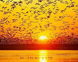 Kuşları Koruyan Çevreci Telefon Uygulaması