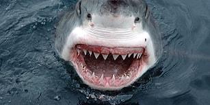 En İyi Köpek Balığı Filmleri