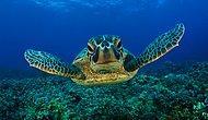 Hollywood'a Mevzu Çıktı: Kaplumbağa Saldırısında 9 Yaralı