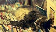 Ölmeden Önce Okumanız Gereken 40 Kitap