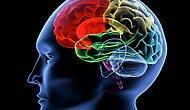 Geç Yatanların IQ'su Daha Yüksekmiş