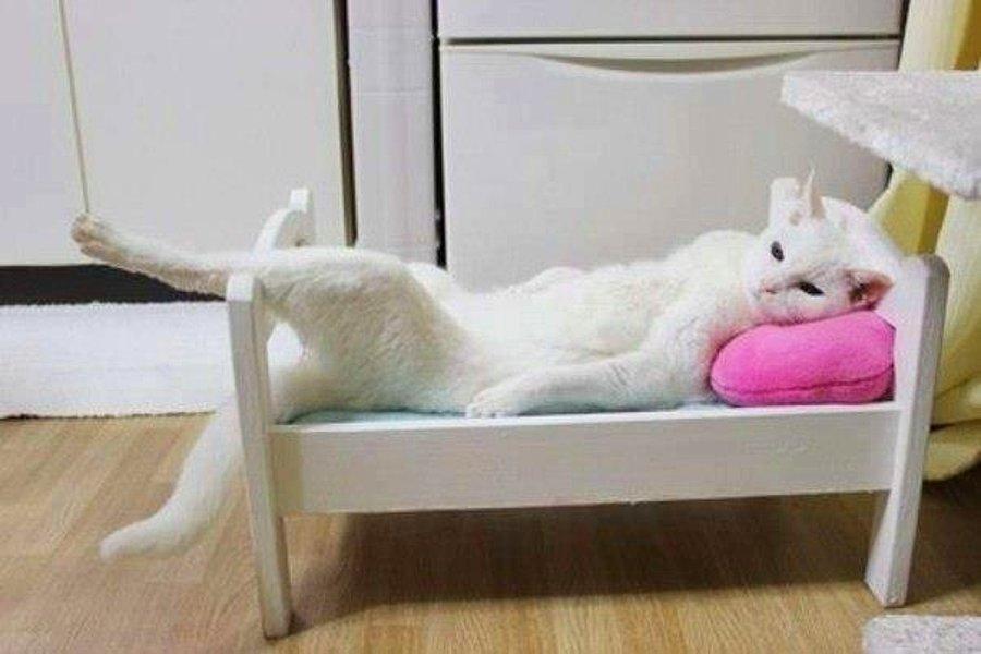 Прикольная картинка кот на кровати
