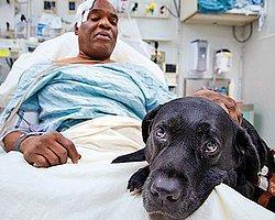 Görme Engelli Williams Hayatını Köpeğine Borçlu