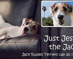 Fenomen Köpek Jesse'den Akıllı Numaralar