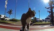 Kedinin Harika Kaykay Macerası