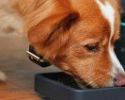 Köpeğiniz için Beslenme Önerileri