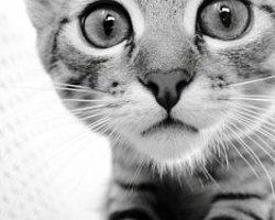 Yavru Kedilerin Tuvalet Eğitimi