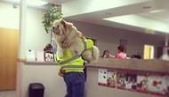 Doktordan Sadece Siz Korkmuyorsunuz! Veteriner Korkusu Yaşayan 20 Zavallı Köpek