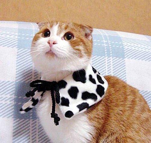 Kedi kafesi: belirtiler, tedavi ve diğer bilgiler 31