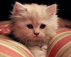 Kediler Hakkında Herşey, Kedilerin Hiç Bilmediğiniz Yanları