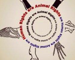 Yeni Yasa Tasarısı Hayvan Haklarını Ne Kadar Koruyacak?