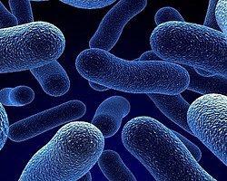 'Ölümcül Enfeksiyonlar Ellerden Bulaşıyor'