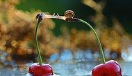 Doğadaki Minik Yaratıkların 23 Muhteşem Fotoğrafı