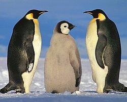 Penguenlerin Dünyanın En Tatlı Hayvanları Olduğunu Gösteren 20 GIF