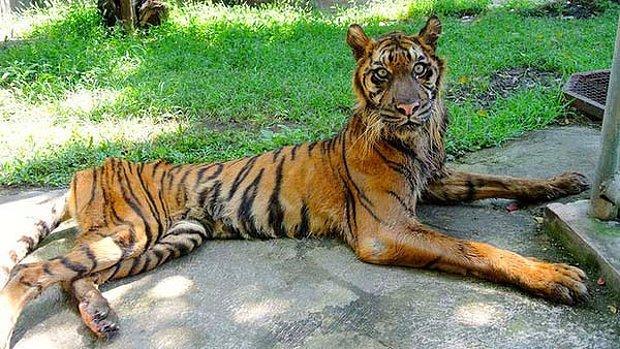 'Ölüm Bahçesi' Olarak Bilinen Hayvanat Bahçesinden Yürek Sızlatan Kareler