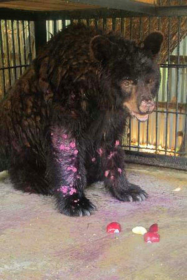 8. Bu hayvanların hali karşısında gözyaşlarına hakim olabilmek çok güç.