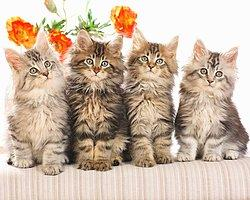 Neyin Peşinde Olduğu Belli Olmayan 22 Kedi