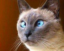 İnanılmaz Pislikler Yapan 20 Haylaz Hayvan