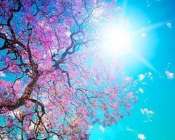 Bahar Yorgunluğuna Karşı Koyun