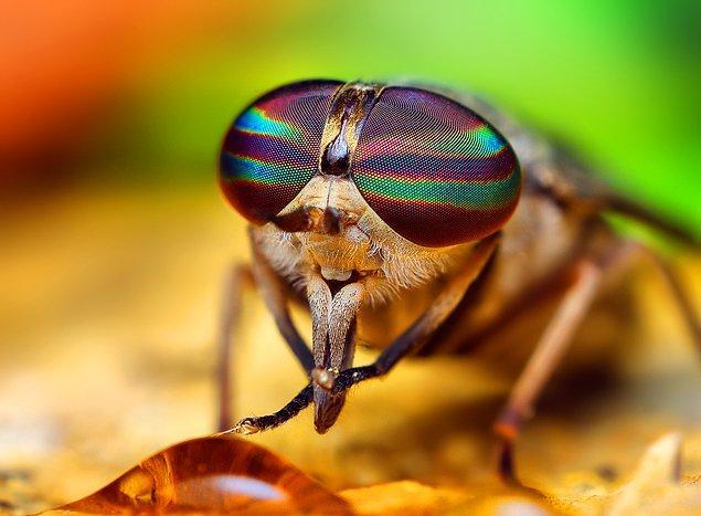 Мухи потирают лапки и проводят их по голове, чтобы очистить молекулы, которые прилипли во время полета.