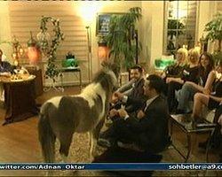 Adnan Oktar Canlı Yayına At Çıkardı İzle