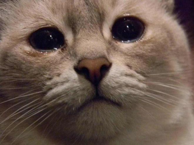 Что делать если котенок плачет у новых хозяев