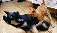 Birbirine Kastı Olan 18 Kedi Ve Köpek